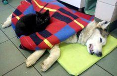 Black Cat Acts as Adorable Nurse at Polish Animal Shelter - Pet360 Pet Parenting Simplified