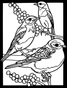 Favorite Birds Stained Glass Coloring Book Dover Publications