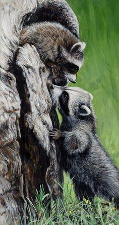 Raccoon at Clear Creek Road Raccoon Art, Cute Raccoon, Racoon, Animals And Pets, Baby Animals, Cute Animals, Woodland Creatures, Woodland Animals, Beautiful Creatures