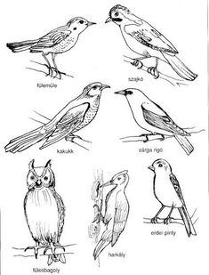 Madarak és fák napja – Anya játsszunk! Outline Pictures, Pictures To Draw, Bird Book, Bird Theme, Spring Theme, Drawing Projects, Nature Journal, Bird Drawings, Nature Crafts