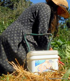 https://flic.kr/p/fyohWi | Putting in the fall garden |         risashome.blogspot.com/2013/08/fall-garden-seed-sprouting...