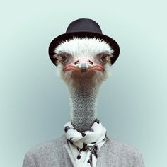 Zoo Portraits by Yago Partal - Design daily news