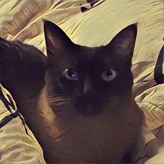 Pocky #cat Animals, Gatos, Animales, Animaux, Animal, Animais