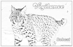 Poster Colour, Wildlife, Posters, American, Shop, Etsy, Animals, Art, Animais