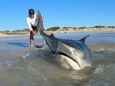 """""""O Grito do Bicho"""": Homens tiram 10 tubarões do mar para tirar fotogra..."""