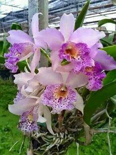 ✿⊱❥ Orquídeas by Alfria Einaeva                                                                                                                                                                                 Más