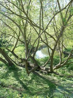Outdoor Furniture, Outdoor Decor, Park, Plants, Parks, Plant, Backyard Furniture, Lawn Furniture, Planets