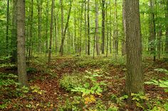 Sacred Grove, Palmyra NY best place to visit in the fall! I loved being there...LDS history