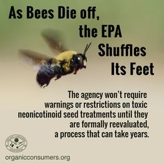 Did you know? Bees are essential to the production of $15 billion worth of U.S. agricultural products per year. But despite their importance to our food system and the planet, the Environmental Protection Agency (EPA) refuses to take the necessary steps to protect these indispensable creatures.   #SaveTheBees #Ag Save Mother Earth, Environmental Studies, Save The Bees, Bees Knees, Save The Planet, Bee Keeping, Organic Recipes, Change The World, Thought Provoking
