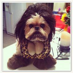 "Winner of ""Soft Surroundings"" Halloween pet costume.  This is ""Snookie"" :)"