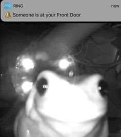 Stupid Memes, Stupid Funny, Funny Memes, Jokes, Cute Little Animals, Cute Funny Animals, Frog Pictures, Funny Pictures, Frog Art