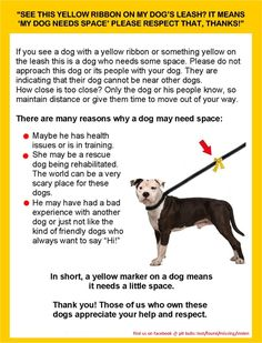 great idea for pit bull owners!