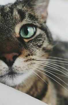 Green's cat version is a simple one you find everywhere, but its love you have to search for.