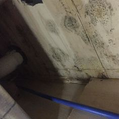 Crawlspace Mold Remediation Rochester NY #roc #rochesterny #microbial #moldremoval #moldinspection #moldassessment