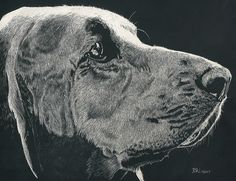 """Penelope"" in Scratchboard, via Flickr. art by BA Lubert. Please be sure to credit me with the artwork!! Thanks"