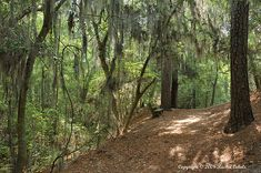 First Landing State Park, Virginia Beach, VA. Love the Bald Cypress Trail and camping under the pines.