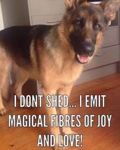 """Famous German Shepherd Quote: """"I don't shed... I emit magical fibers of joy and love!"""""""