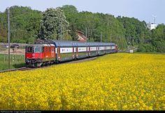 420 225 SBB Re 420 at Marthalen, Switzerland by Richard Behrbohm Swiss Railways, Vacation Destinations, 19th Century, Anatomy, Transportation, Real Estate, Fancy, Vehicles, Switzerland