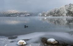 Popular on 500px : Peaceful Lake Bohinj by angelainokchong
