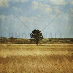 The Lonely Tree - Wall Mural