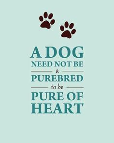 A dog need not be a purebred to be pure of heart.