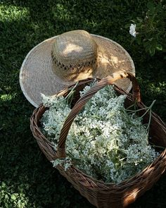 Come Reza Ama, Spring Aesthetic, Summer Dream, Summer Time, Elderflower, Anne Of Green Gables, Farm Life, Country Life, Country Style
