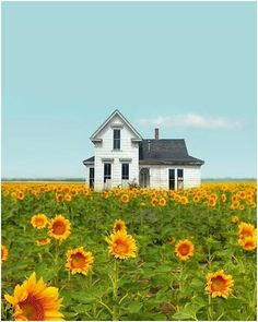 Old farmhouse in sunflower fields~ I can see it now. you and Elijah walking out the front door to sit on the porch swing and watch your kids run through the sunflower fields :) Beautiful Homes, Beautiful Places, Sunflower Fields, Field Of Sunflowers, Sunflower House, Old Farm Houses, Farms Living, Old Barns, The Ranch