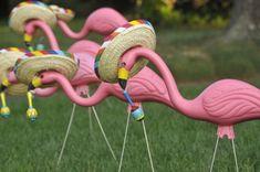 Mexican Flamingos! Sombreros and maracas oh my!