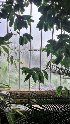 Atmospheric Kew III - Limited Edition of 100 Photograph Plant Aesthetic, Nature Aesthetic, Aesthetic Green, Color Photography, Nature Photography, Digital Photography, Iphone Wallpaper Green, Kew Gardens, Realism Art
