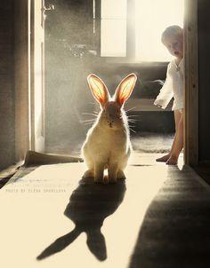 Russian photographer Elena Shumilova-the ears.. | by aleshurik