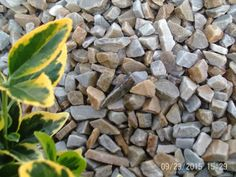 A mixture of Grey, Yellow & Brown in a size. More on mvstone. Decorative Gravel, Gravel Driveway, Weather Warnings, Severe Weather, Yellow And Brown, Flower Beds, Ornament, Quartz, Gardens