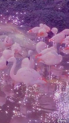 Jellyfish Painting, Jellyfish Sting, Watercolor Jellyfish, Jellyfish Aquarium, Jellyfish Drawing, Jellyfish Tattoo, Iphone Wallpaper Tumblr Aesthetic, Aesthetic Pastel Wallpaper, Aesthetic Wallpapers