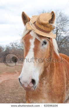 ac8e4e7a4f draft horses humor - Google Search