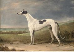 English School, 19th Century  A prize greyhound in an extensive landscape