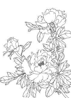 Flower Drawing Tumblr, Flower Line Drawings, Flower Sketches, Art Drawings, White Flower Png, Watercolor Flowers, Watercolor Paintings, Chinese Painting Flowers, Silk Painting