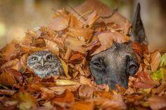 Leaf buddies