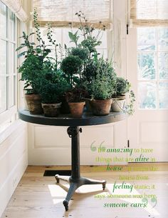 indoor herb garden; might replace the table with a white tulip base and marble tapletop