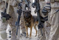 Ricky, an explosive detector dog, with Canadian soldiers from Task Force 3-09 Battle Group during operation Tazi, a village search and security operation in the Dand area of Kandahar Province, southern Afghanistan, on January 26, 2010. (AP Photo/Kirsty Wigglesworth