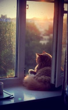 Where ever I am I always find myself looking out the window wishing i was somewhere else. ~Angelina Jolie~