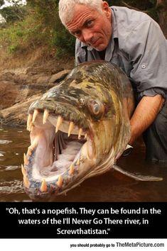 Wait, I Recognize That Fish