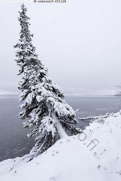 Pallasjärven rantoja - Lappi järvi Pallasjärvi lumi jää talvi kuusi luminen