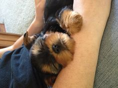 I remember when my yorkie was like that ;]