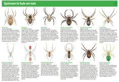 Spinnenzoekkaart 2014 Vroege vogels deel 2