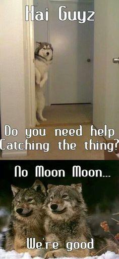 No, no, Moon Moon.