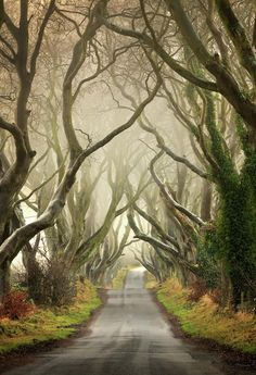 bonitavista:  Dark Hedges, Antrim, Northern Ireland photo via daffy