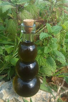 Calming Lemon Balm Oil for Children
