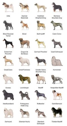Akc Breeds of Dogs images