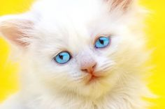 Cat Pictures Blog: Cute Cats Pictures
