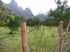 China Guilin Yangshuo Mountains Bamboo click the pic to check out things to do in China Stuff To Do, Things To Do, Guilin, Kung Fu, Places To Travel, Bamboo, Faces, China, Mountains