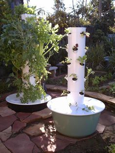 Tower Garden! Awesome! Here you can see the big difference between just 1-2 weeks of growth and 4-6 weeks of growth!